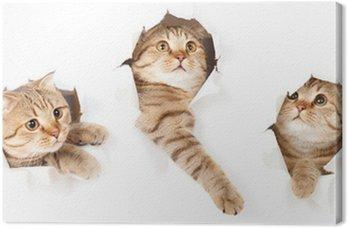 Zestaw jednego kota w bocznej papieru podarte izolowane otworu