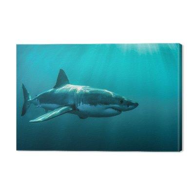 Great white shark underwater.