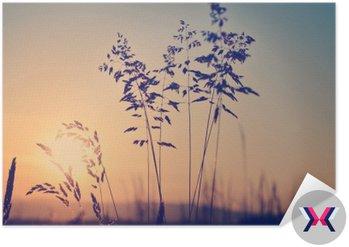 Łąka o zachodzie słońca, zen medytacyjne sceny