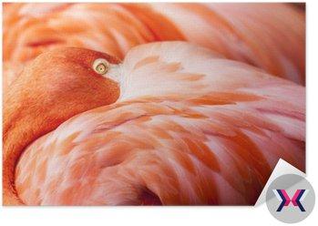Pióra - Pink Flamingo ptaków w tle z głową ukryty na Piór