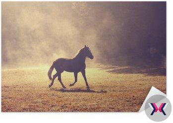 Piękny poranek słońce mglisty łąki z krajowym brązowego konia.