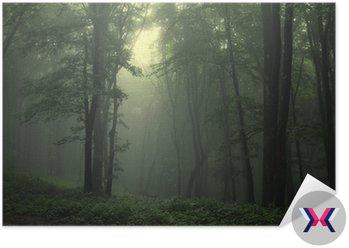 Zielony las po deszczu