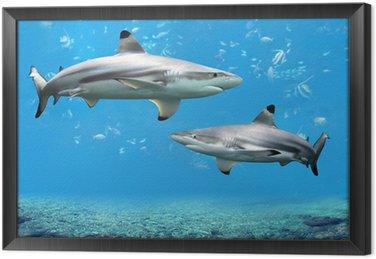 Blacktip Sharks Reef Apartamenty w wodach tropikalnych
