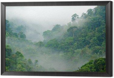 Las deszczowy poranek mgła