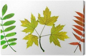 Jesienne liście klonu, jesionu i Sorb