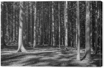 Nadelwald Monochrom
