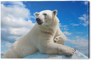 Niedźwiedź polarny z nieba