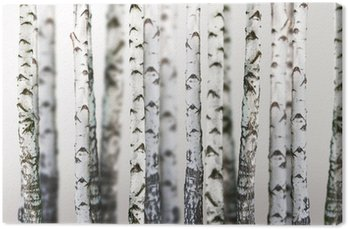 natural background - birch - wallpaper