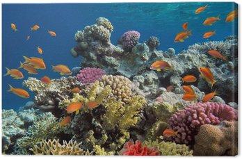 Podwodny strzelać żywe rafy koralowej z ryb