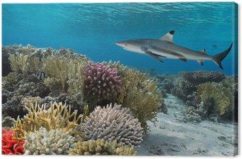 Kolorowy podwodny rafa koralowa z żółtym pozbawiony ryb i duże