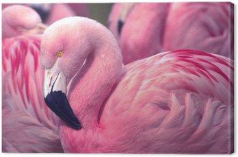 Chilijska Pink Flamingo