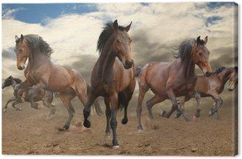 Pięć galopujący koń zatoka nieposkromiony
