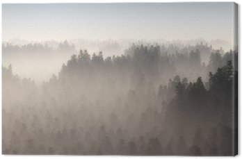 Dense pine forest in morning mist.