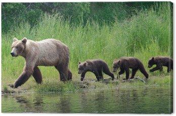 Kobieta Alaskan Niedźwiedź z Yankees