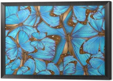 Abstrakcyjne tło tropikalne motyle Morpho Menelaos