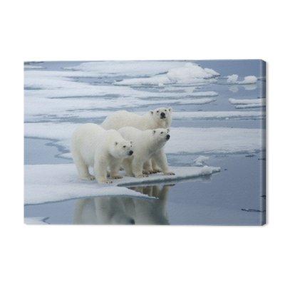 Polar Bear & Yearling Cubs