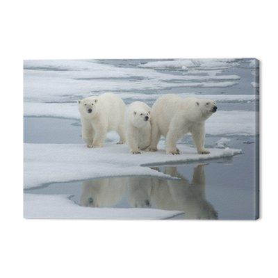 Niedźwiedź polarny i dwa szczeniaki roczniak