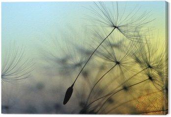 Golden sunset and dandelion, meditative zen background