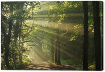 Sun rays shining through the trees in the forrest.