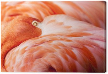 Flamingo Feathers - Pink Bird Background with Head Hidden on Feathers