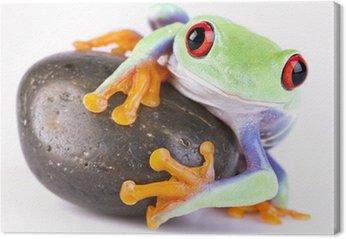 Żaba na skale
