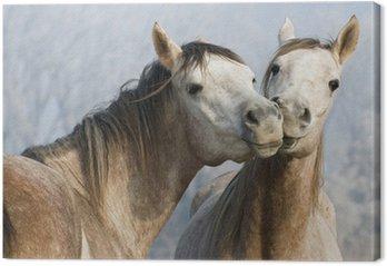 Śmieszne konie