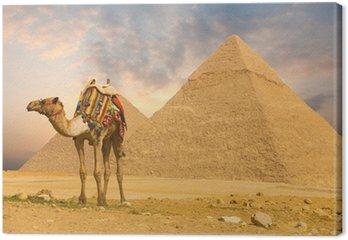 Camel Standing Pyramids h