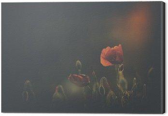 Poppy in sunset