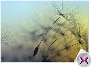 Złoty słońca i mniszek lekarski, medytacji zen w tle