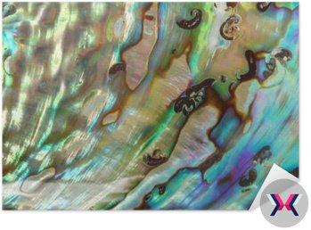 Zamknąć tła niebieski, zielony i fioletowy perła Abalone shel