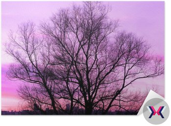 Sylwetka wielkiego starego drzewa na piękny zachód słońca fioletowym tle retro filtrowane