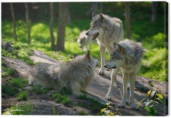 Wolf Pack z trzech wilków