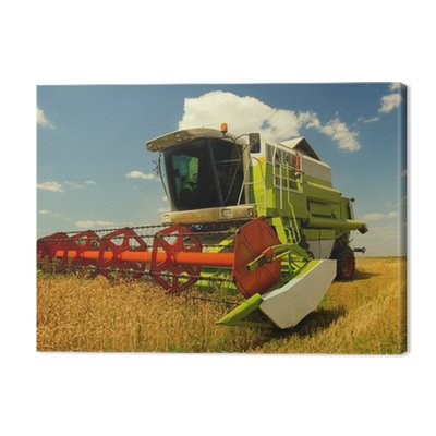 Combine harvester working on the wheat field