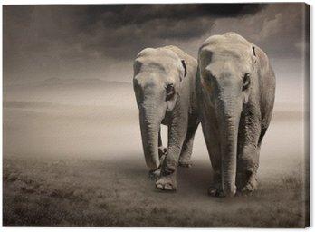 Para słoni w ruchu