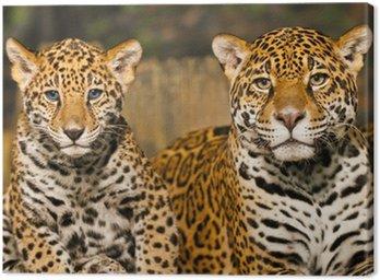 Rodzina Jaguar