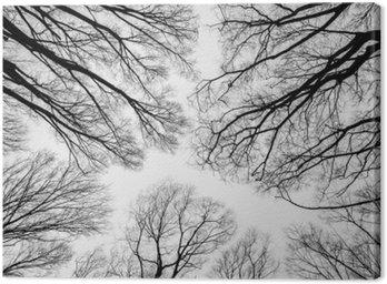 Oddział martwym drzewie