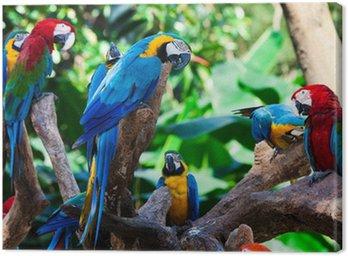 Papugi grupowe