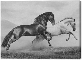 Konie uruchomić