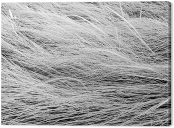 Black and white photo,close up long grass field texture backgrou