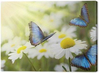 Łąka niebieskie motyle