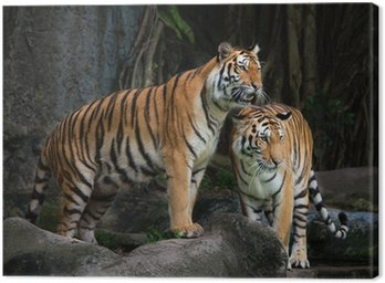Portret Royal Tygrys bengalski
