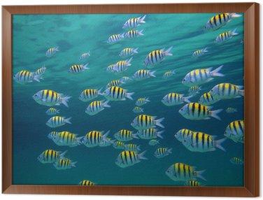 Starszego sierżanta ryby