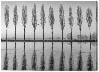 Alberi riflessi sul lago all'alba bianco e nero w