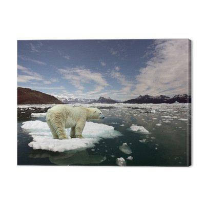 Polar Bear i globalne ocieplenie