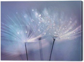 Piękne krople rosy na makro z nasion mniszka. Piękne niebieskie tło. Duże złote krople rosy na dandelion spadochronem. Soft marzycielski przetargu formą artystyczny wizerunek.