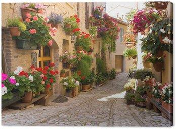 Vicolo con fiori, Spello
