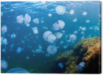 Jellyfishes (Rhizostoma Pulmo), na Morzu Czarnym.
