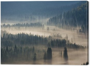 Drzew na łąki w dół woli lasu iglastego w mglisty górach