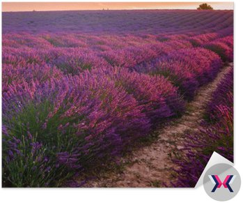 Lavender pola na wschodzie, Valensole plateau (Francja)