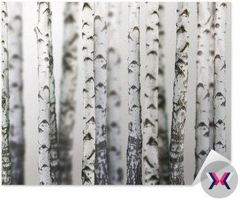 Naturalne tło - brzoza - tapety